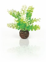 biOrb Aquarien Caulerpa grün (46090)