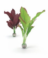 biOrb Seidenpflanzen Set mittel grün & lila (46101)