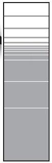 T&J VETRO Glas-Sichtschutz Streifen Dekor Typ Rechteck 180